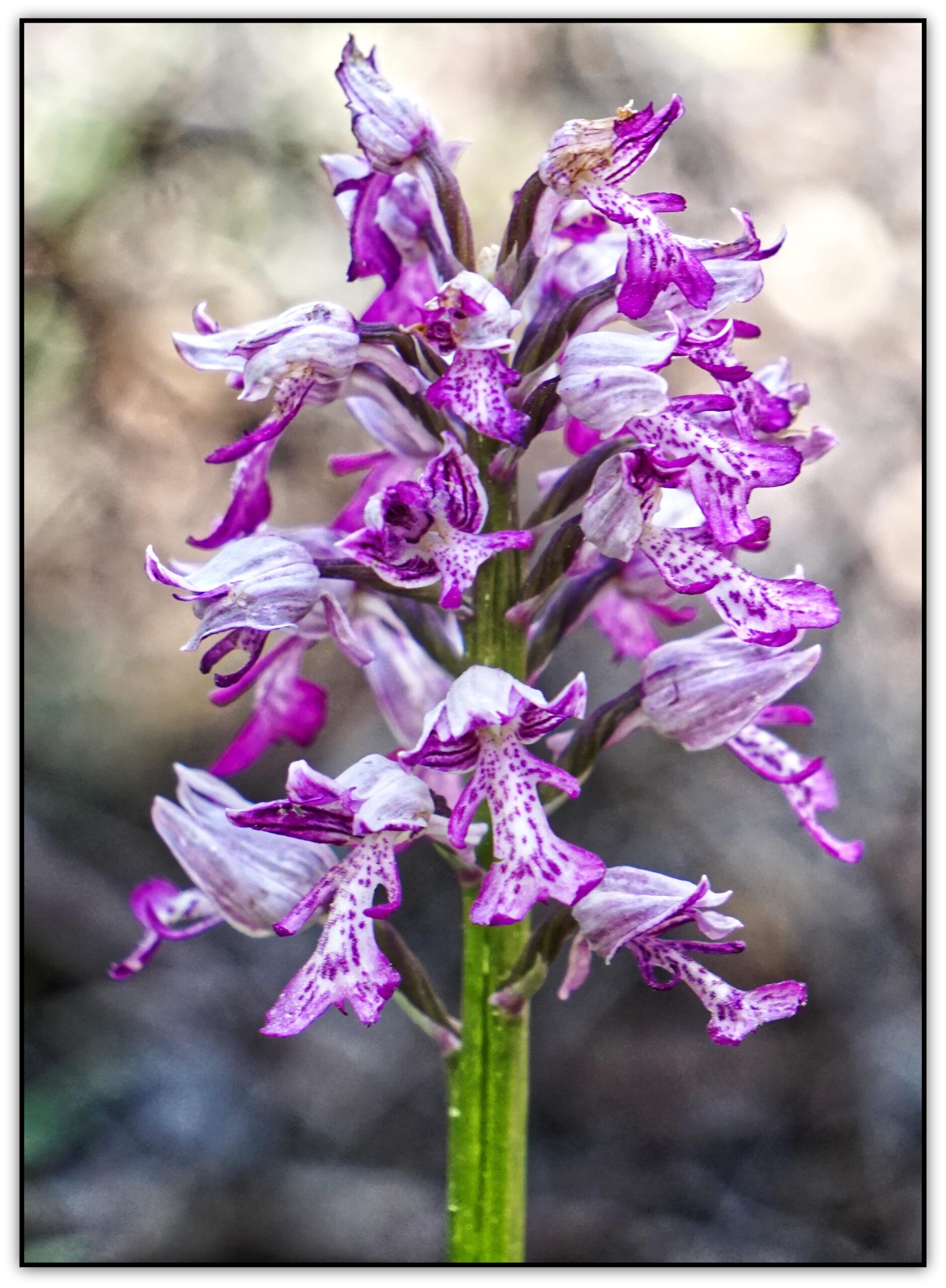 12-orchidée02522