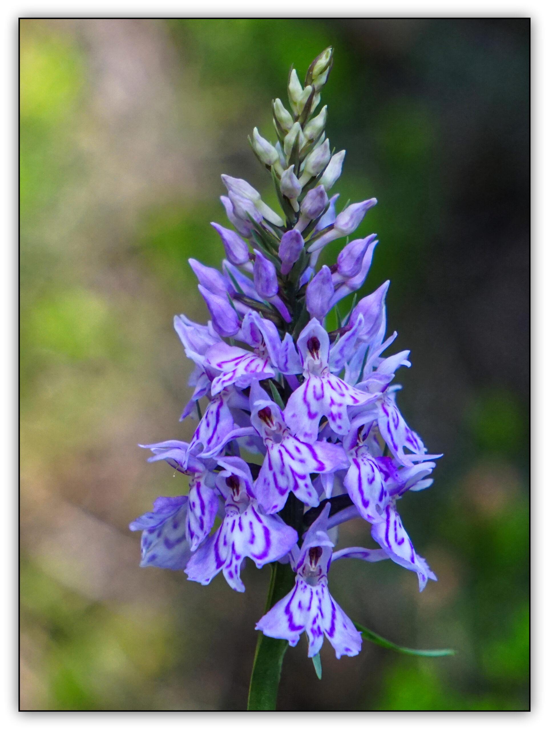13-orchidée02355