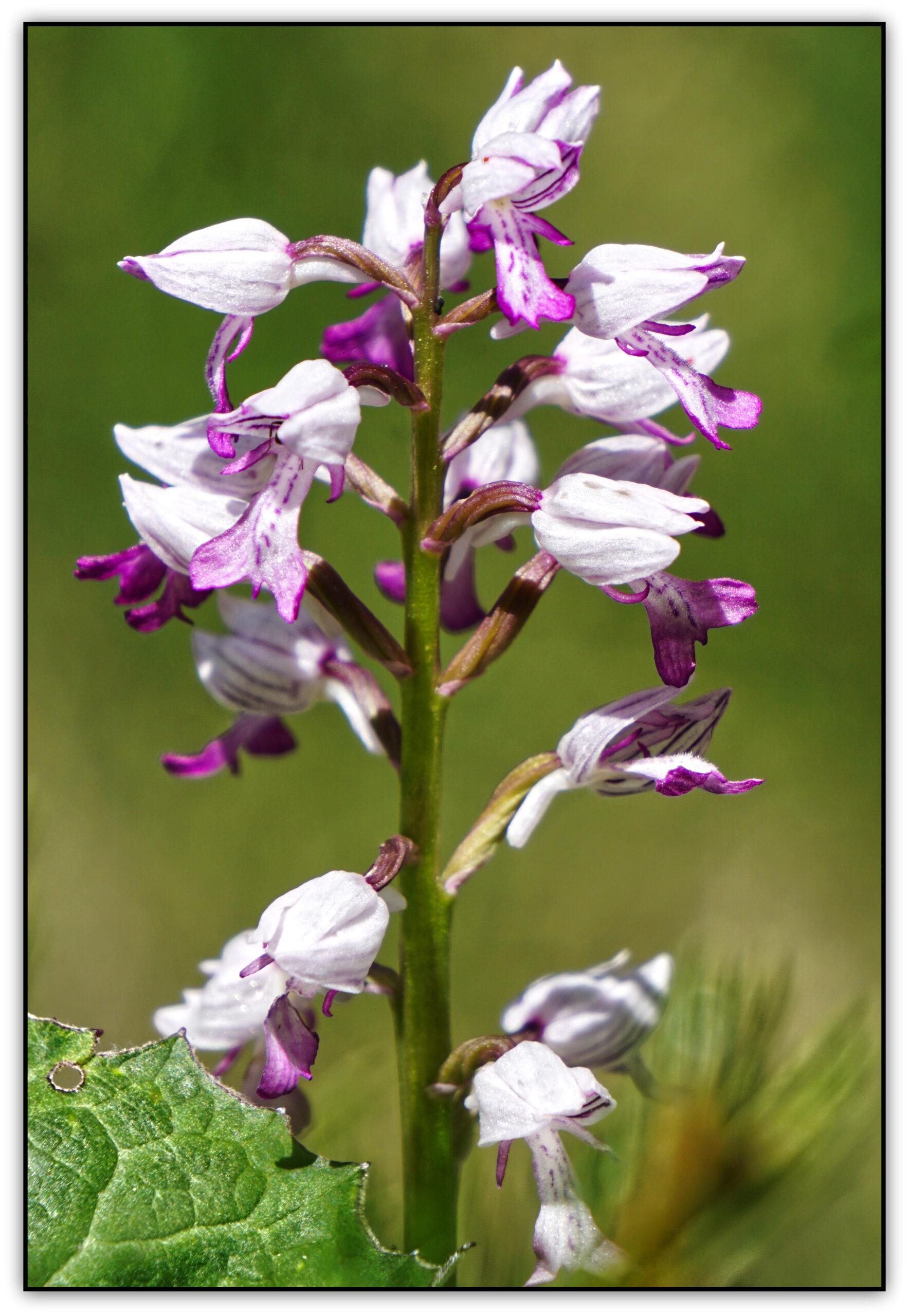 24-orchidée02559