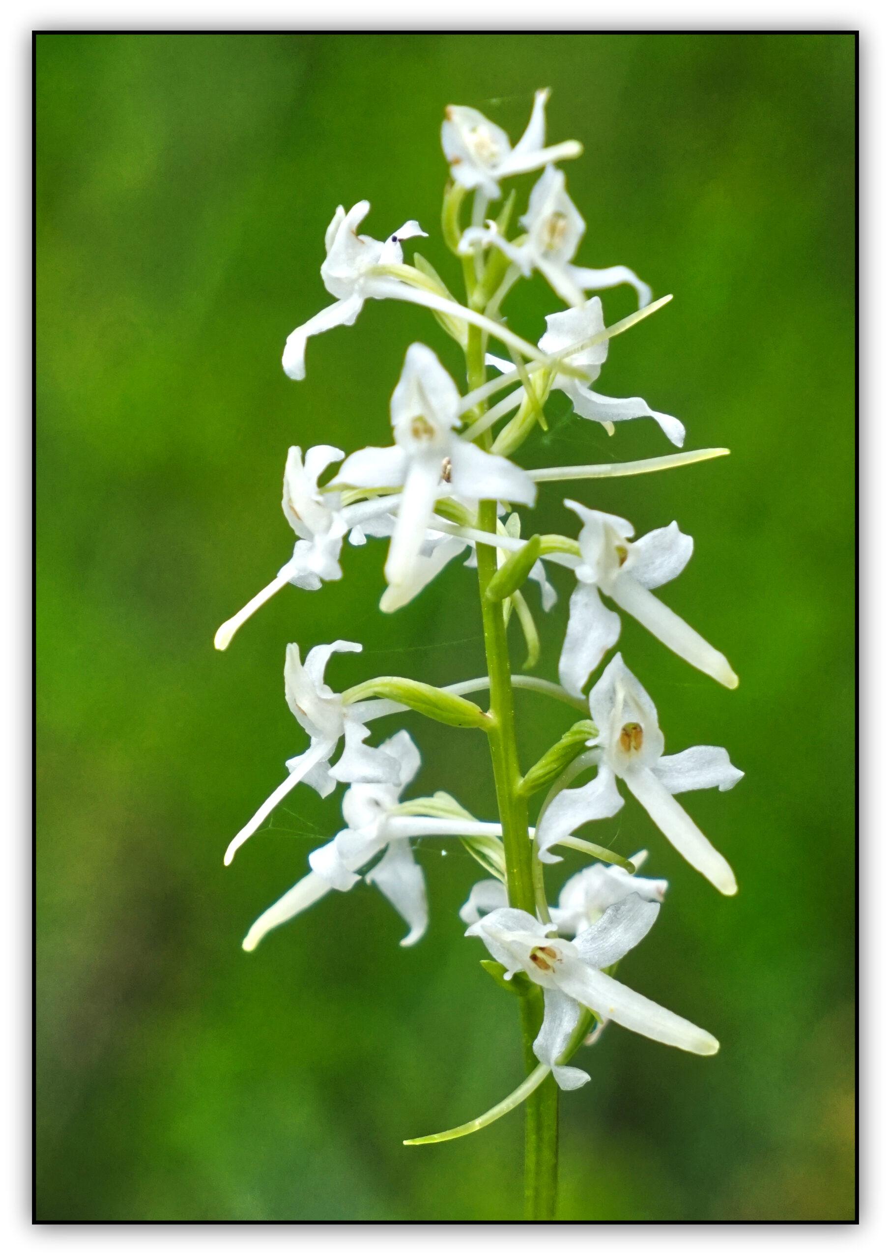 26-orchidée02410